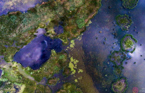 Дунайская жемчужина: как экологи восстановили остров Ермаков Дунайская жемчужина: как экологи восстановили остров Ермаков lyudkevich ermakov 19 614x395