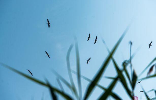 Дунайская жемчужина: как экологи восстановили остров Ермаков Дунайская жемчужина: как экологи восстановили остров Ермаков lyudkevich ermakov 2 614x395
