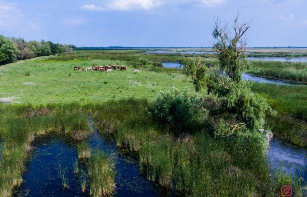 Дунайская жемчужина: как экологи восстановили остров Ермаков Дунайская жемчужина: как экологи восстановили остров Ермаков lyudkevich ermakov 25 614x395