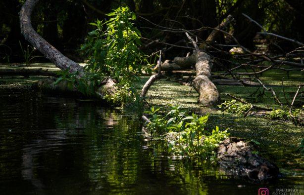 Дунайская жемчужина: как экологи восстановили остров Ермаков Дунайская жемчужина: как экологи восстановили остров Ермаков lyudkevich ermakov 5 614x395