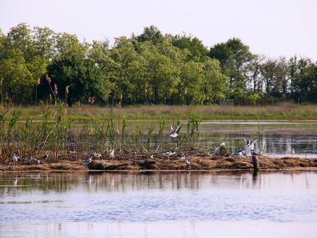 На Кинбурнской косе построили искусственный остров для птиц На Кинбурнской косе построили искусственный остров для птиц ostrov