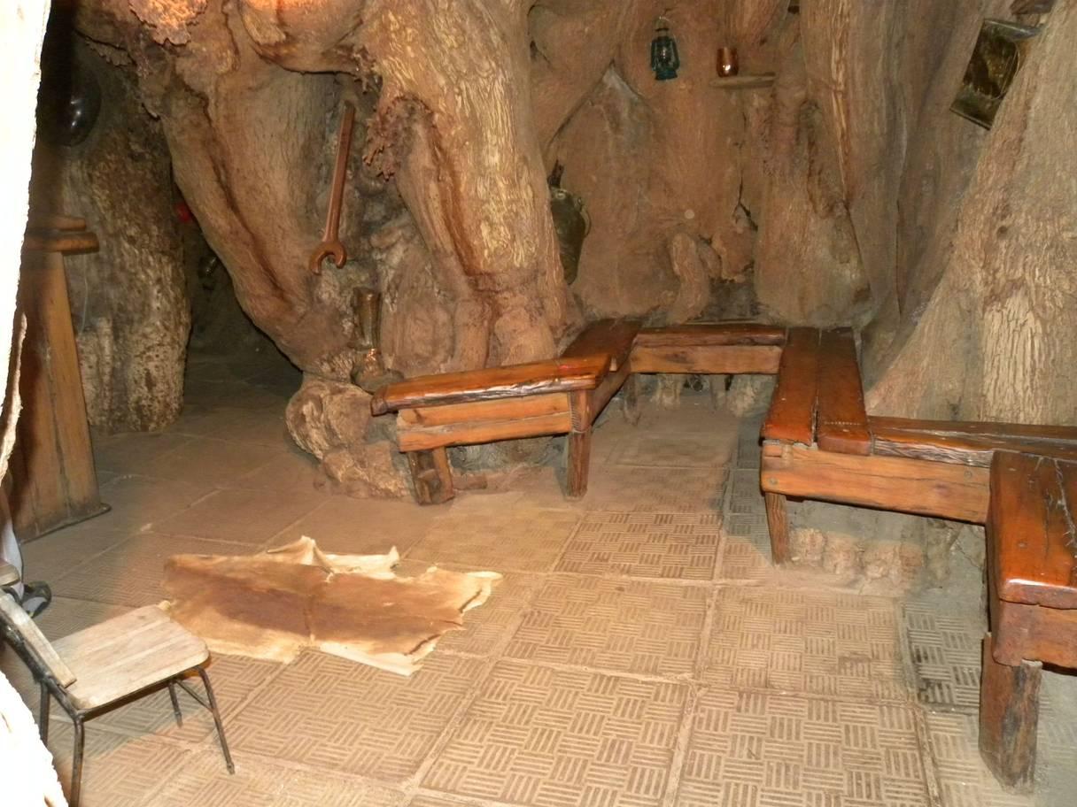 Баобабов нет: самые старые деревья планеты погибают из-за изменений климата Баобабов нет: самые старые деревья планеты погибают из-за изменений климата patrut bar