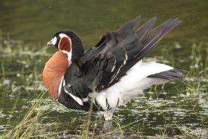 В Киеве нашли чрезвычайно редкую птицу