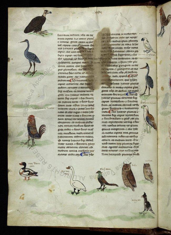 Ученые пересмотрят историю Европы из-за какаду Ученые пересмотрят историю Европы из-за какаду rukopis pobolshe