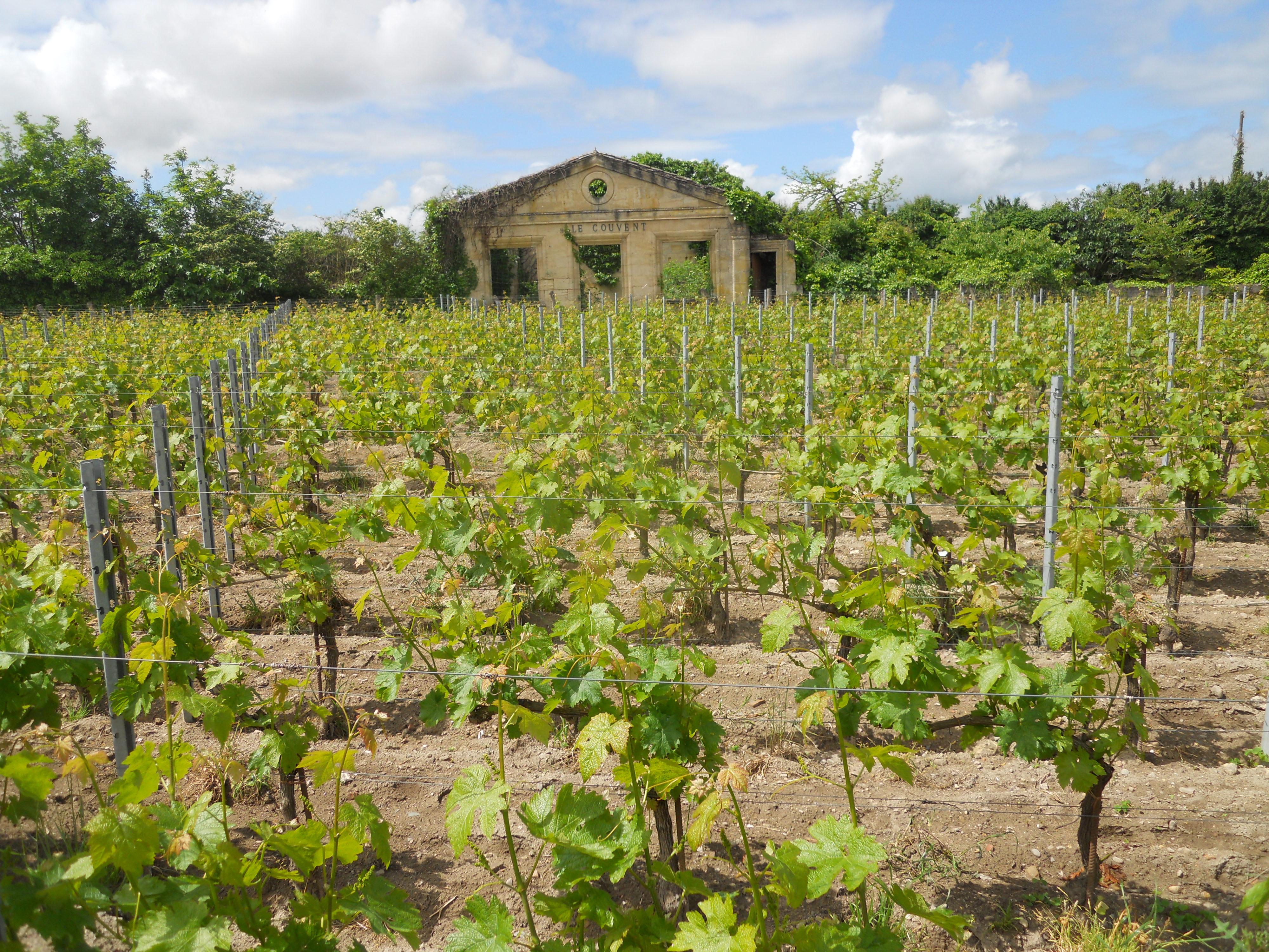 4 дні у Бордо: з вином і без вини 4 дні у Бордо: з вином і без вини sen emiljon1
