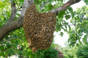В Эквадоре пчелы уложили на поле две футбольные команды и судью