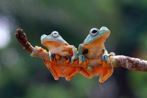 Пестициды превращают лягушек в самок