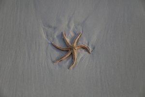 Морская звезда прошлась по пляжу во Флориде (видео)
