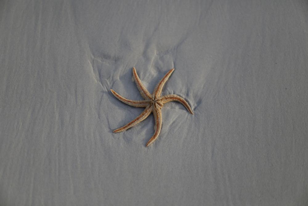 Морская звезда прошлась по пляжу во Флориде (видео).Вокруг Света. Украина