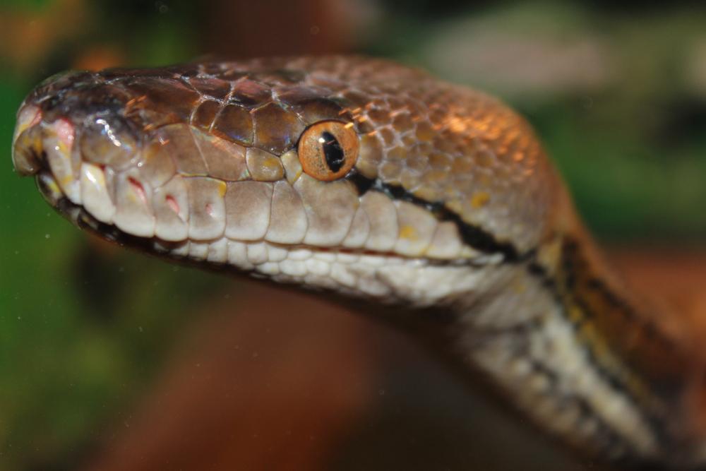 В Эквадоре и Перу обнаружены пять новых видов змей.Вокруг Света. Украина