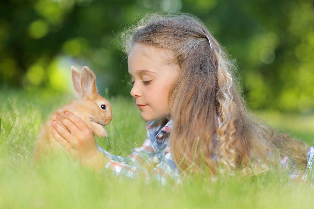 Приручение кроликов пагубно отразилось на размерах их мозга.Вокруг Света. Украина