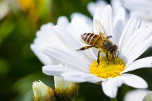 Меда не будет: в Украине массово гибнут пчелы