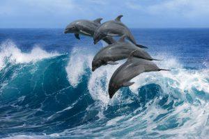 Более тысячи дельфинов гонялись  за китом, чтобы покататься