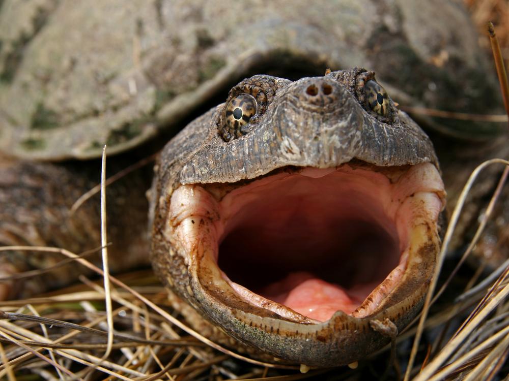 В США судят учителя, скормившего черепахе щенка на глазах у детей