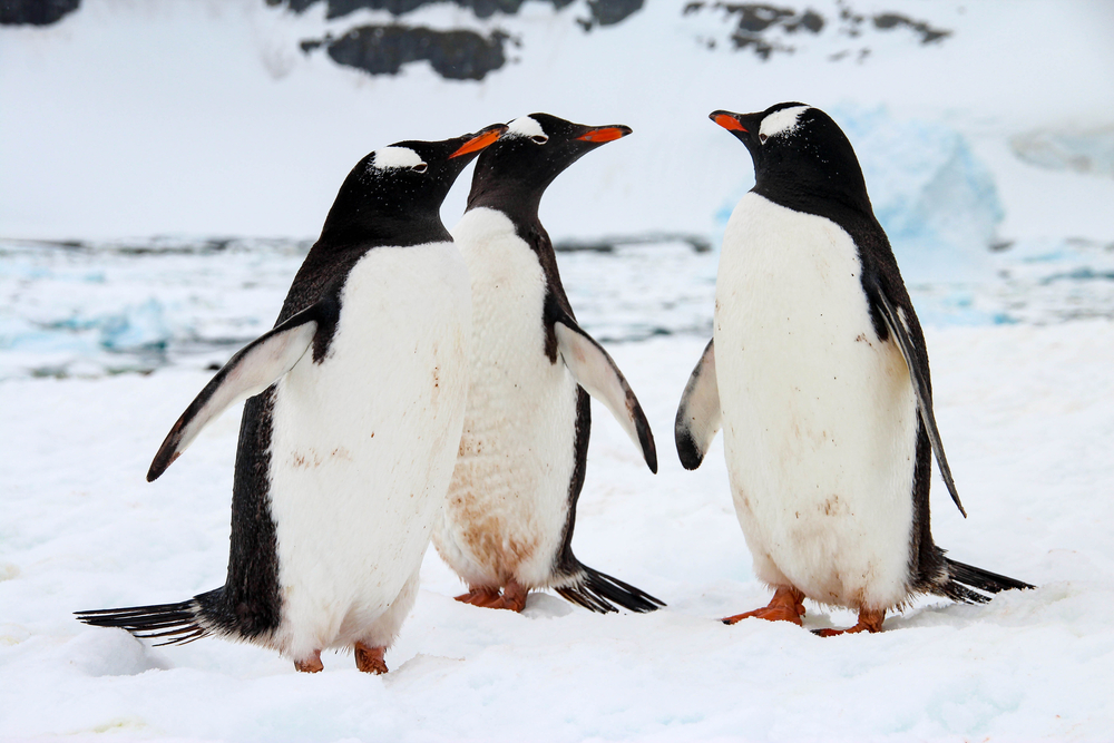 Он уже везде: ученые обнаружили пластик в «нетронутой» пустыне Антарктиды