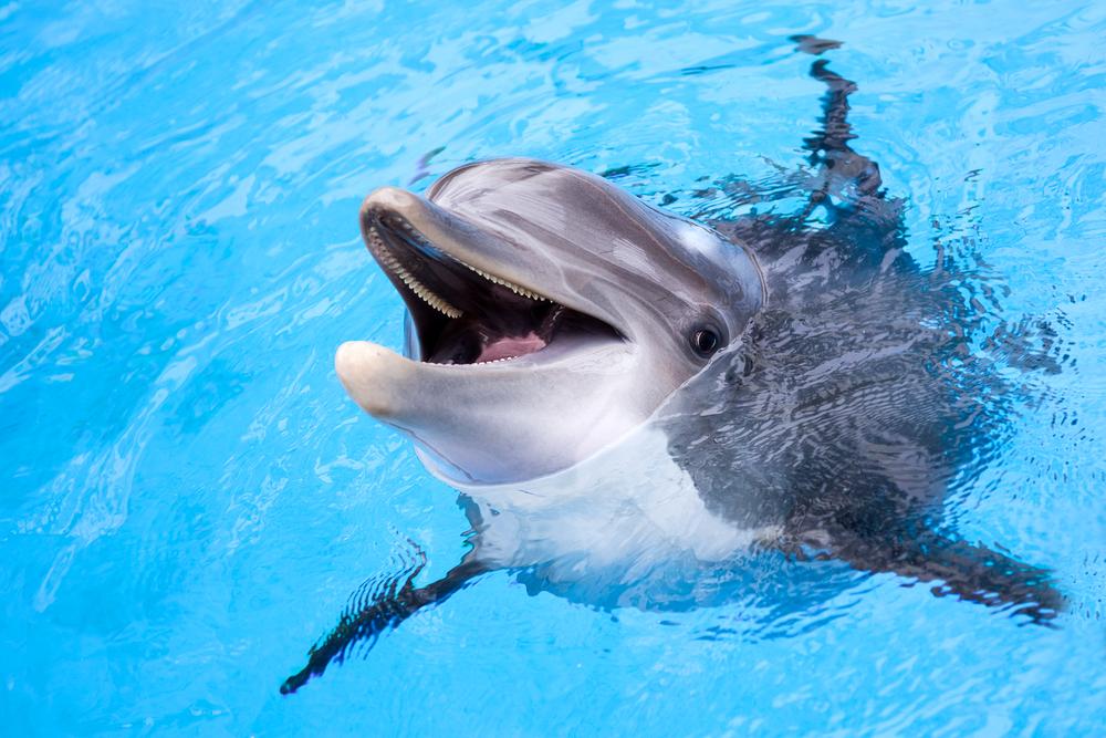 В Одессе дельфиненок родился прямо на глазах у посетителей дельфинария
