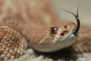 Американца укусила отрубленная голова змеи