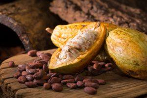 Древние майя расплачивались шоколадом