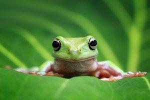 В янтаре нашли древнейшую лягушку