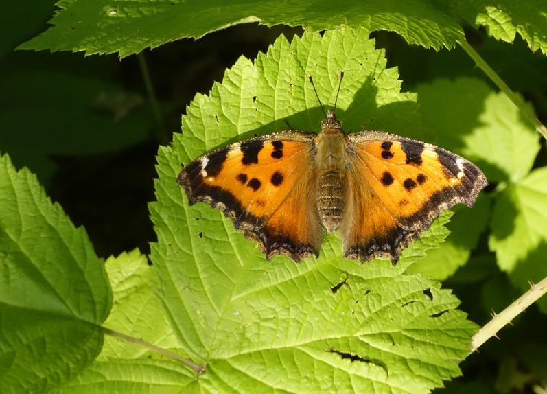Нашествие бабочек в Киеве: энтомолог объяснил причину