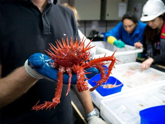 Морские чудовища: фотографии существ, обитающих на глубине 5000 м Морские чудовища: фотографии существ, обитающих на глубине 5000 м strange unusual deep sea animals 12 5b1651c47ff31  700