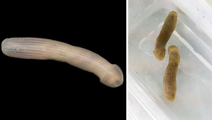 Морские чудовища: фотографии существ, обитающих на глубине 5000 м Морские чудовища: фотографии существ, обитающих на глубине 5000 м strange unusual deep sea animals 22 5b16588ea63ed  700