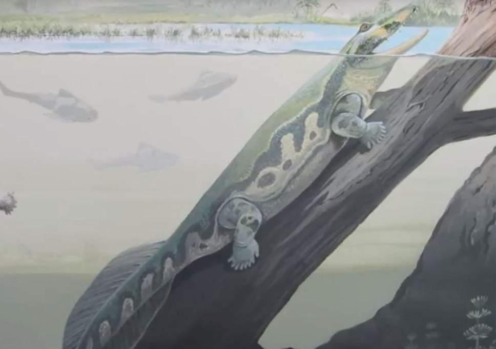 Первые доисторические животные выползли на сушу в Антарктиде