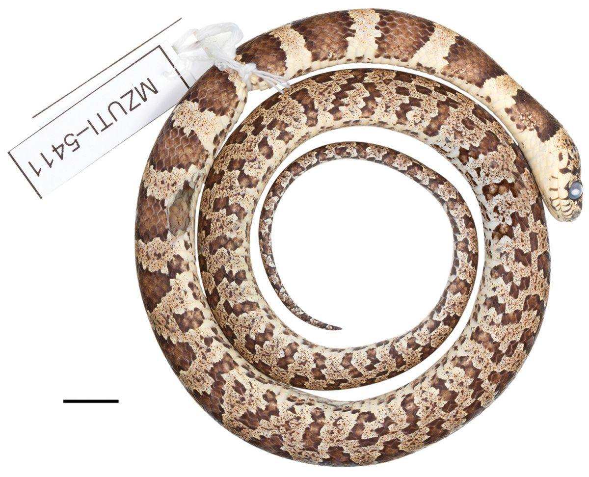 В Эквадоре и Перу обнаружены пять новых видов змей В Эквадоре и Перу обнаружены пять новых видов змей zmeya