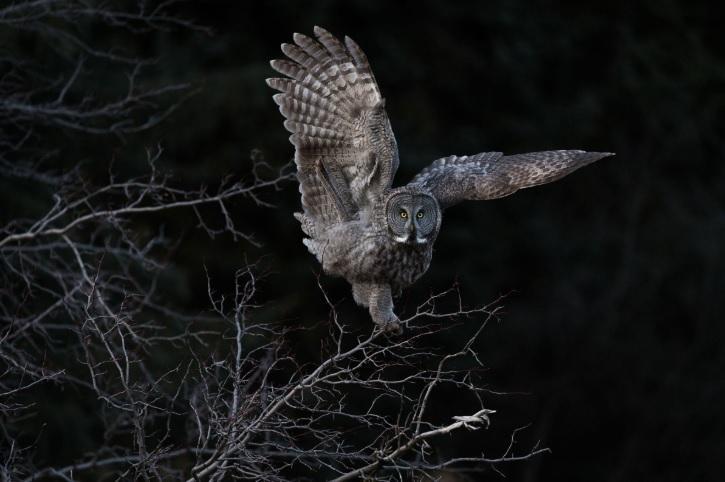 Определены лучшие фото птиц в 2018 году