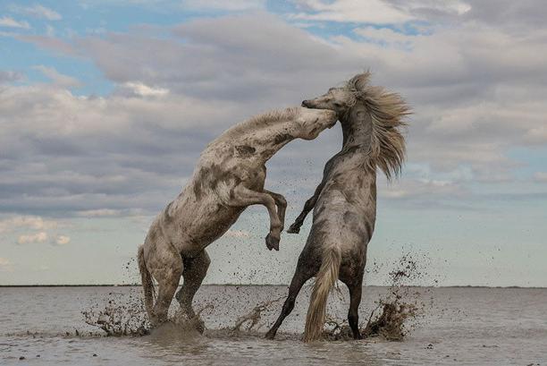 Защитники природы подвели итоги фотоконкурса года.Вокруг Света. Украина
