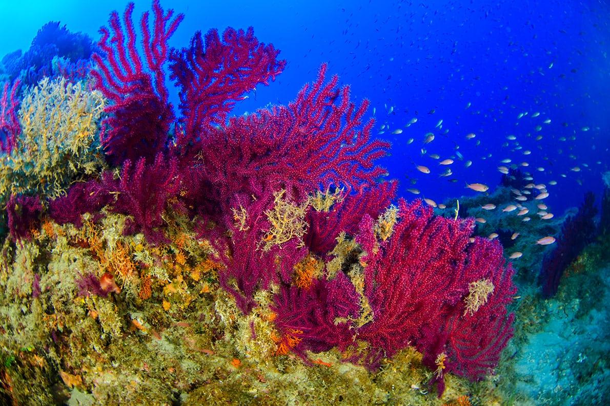 Экологи показали коралловые леса у подводных вулканов Сицилии