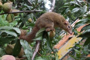 Землеройки едят перец чили дюжинами: зоологи объяснили почему