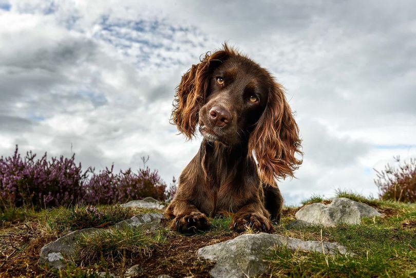 В Великобритании выбрали самых фотогеничных собак