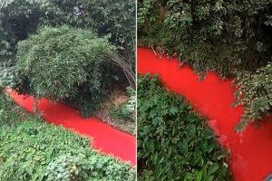 Река в Китае стала кроваво-красной (видео)