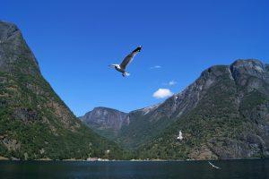 Путешествие в Норвегию: викинги, милость Одина и селёдка на завтрак