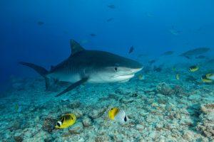 Косметические компании убивают тысячи акул ради крема