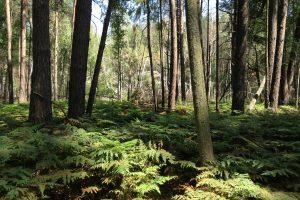 Древнейшие леса Украины: легенды и реальность Полесья