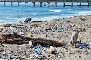 Гавайи, Бали, Доминикана: 13 самых грязных пляжей мира (фото)