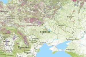 Гринпис продемонстрировала масштабы уничтожения лесов в мире