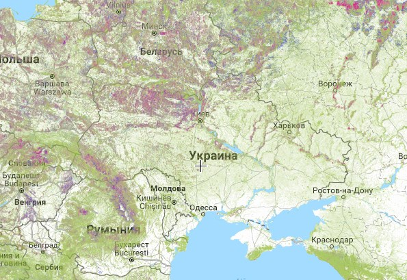 Гринпис продемонстрировала масштабы уничтожения лесов в мире.Вокруг Света. Украина