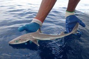 Во Флориде обнаружили «инопланетную» акулу