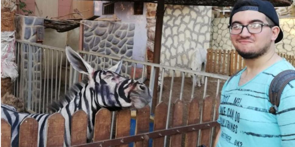 В зоопарке Каира ослов выдавали за зебр