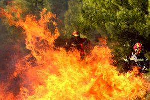 В Греции от масштабных пожаров погибло 60 человек