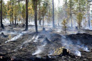 Швеция тушит лесные пожары авиационными бомбами (видео)