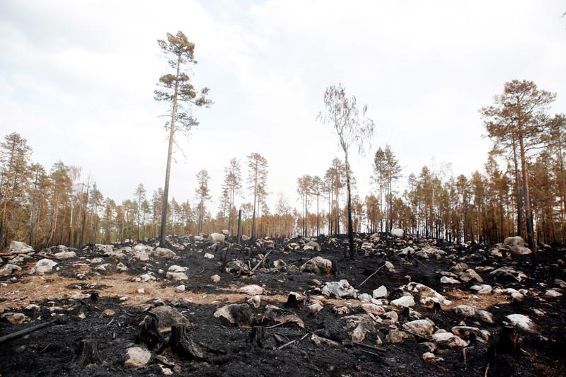 Пожары в Скандинавии усилят глобальное потепление: ООН