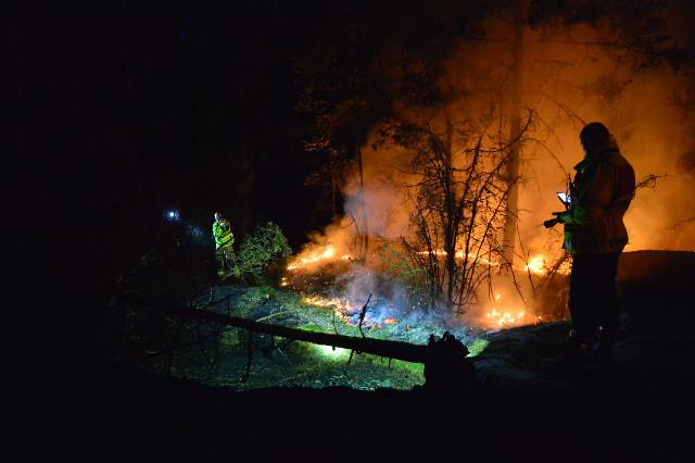 Швецию из-за небывалой жары охватили пожары