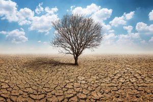 В Украине меняется климат