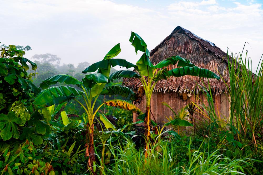 Последнего выжившего отшельника из амазонского племени сняли на видео.Вокруг Света. Украина