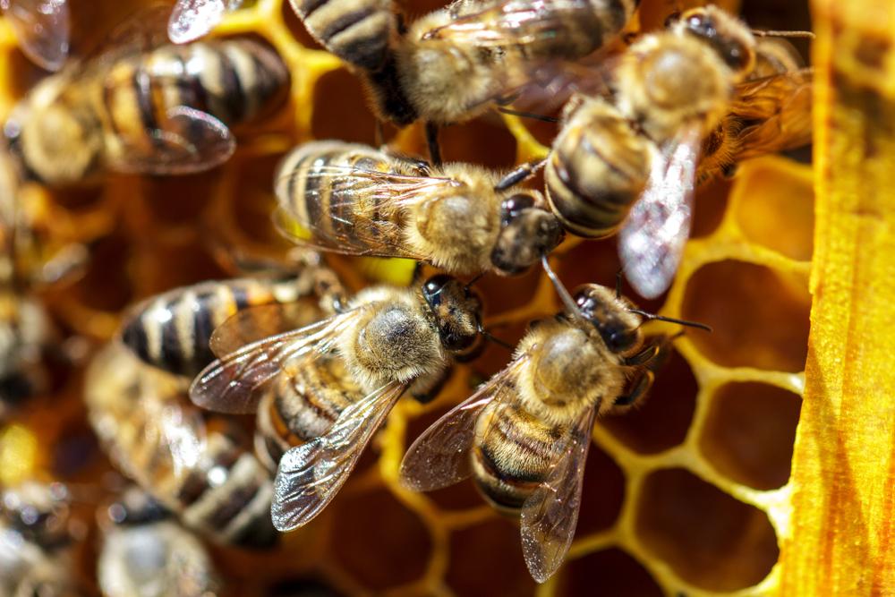 В США на женщину напал рой из 80 тысяч пчел