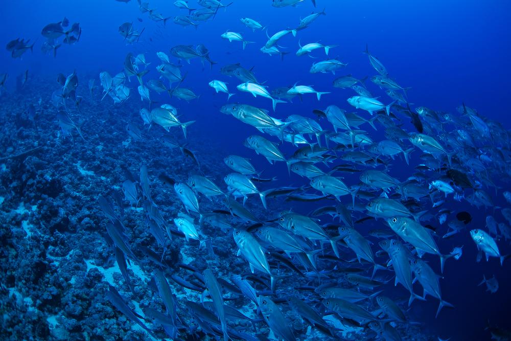Каждая третья пойманная в океане рыба вылавливается зря: ООН